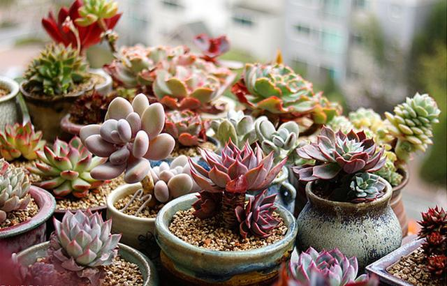 Can plants change pots without changing soil? Can the old soil be used?