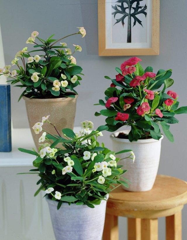 7 kinds of indoor flowers are planted in an unusually beautiful appearance, but there are not many people who raise them.